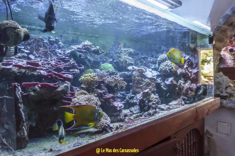 aquarium_0001