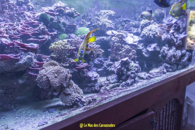 aquarium_0003