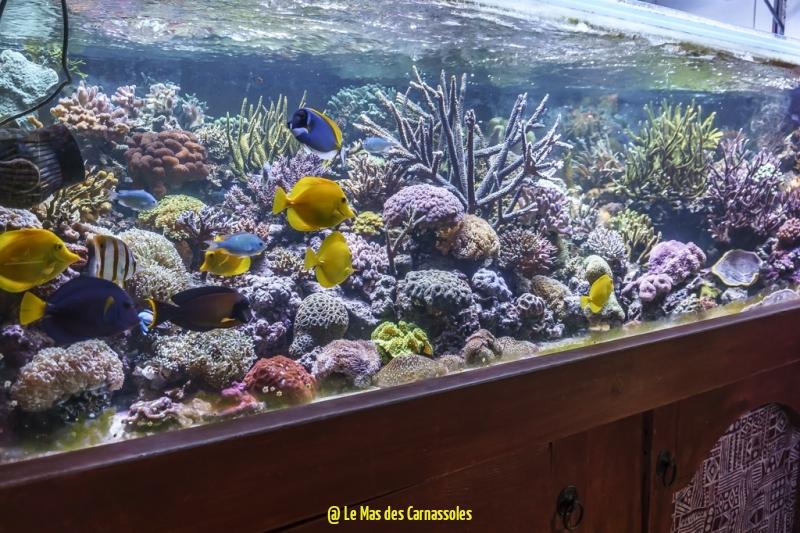 aquarium_0004