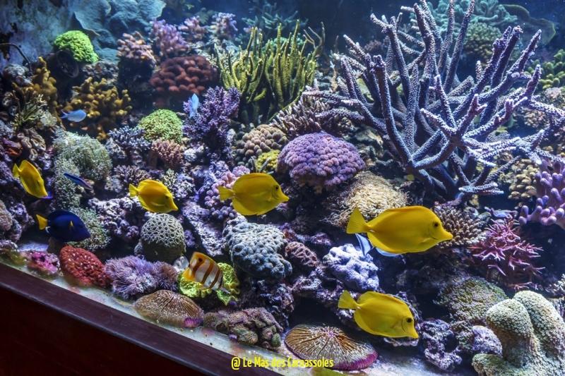 aquarium_0006