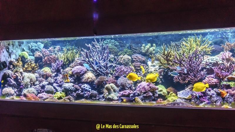 aquarium_0007