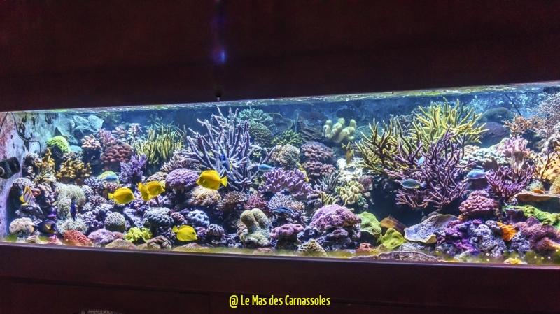 aquarium_0008