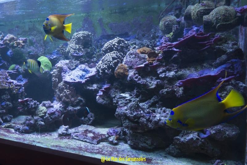 aquarium_0009