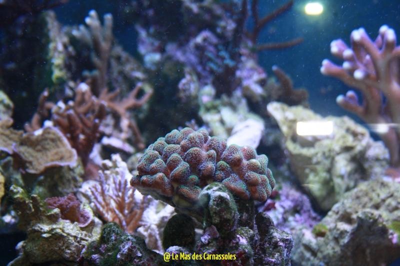 coraux_1472