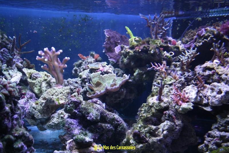 coraux_1488