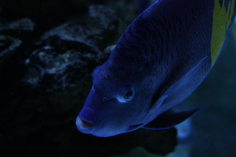 poissons_1402
