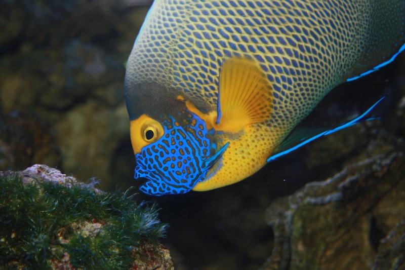 poissons_1441